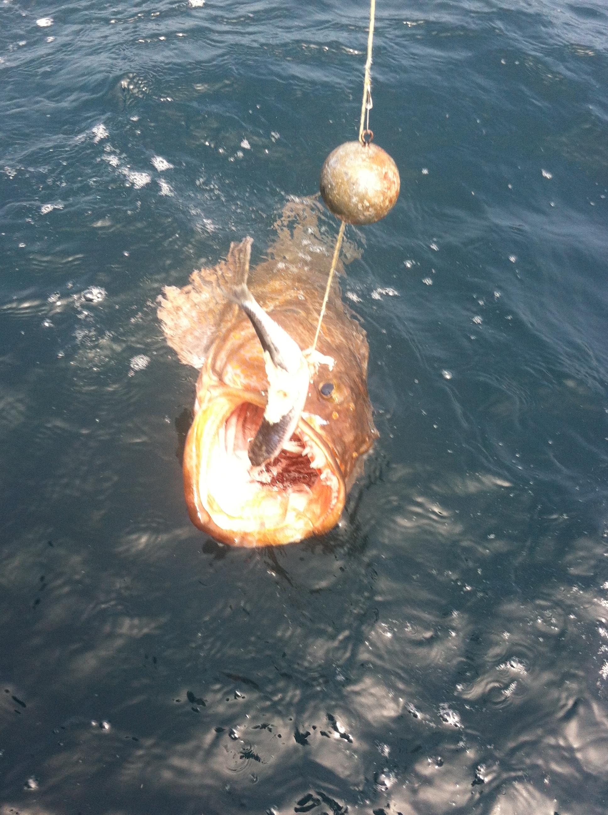 Halibut fishing off the oregon coast for Oregon fish and game