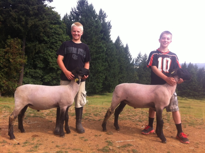 My Lamb is never the cheap stuff.  The are hand raised Champions by Brock and