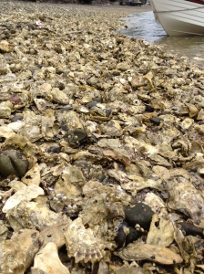 This is OYSTER HEAVEN
