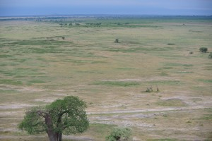The plains of Tanzania